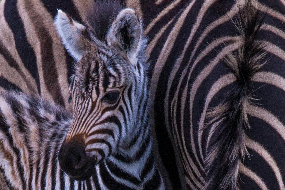 Swaziland -