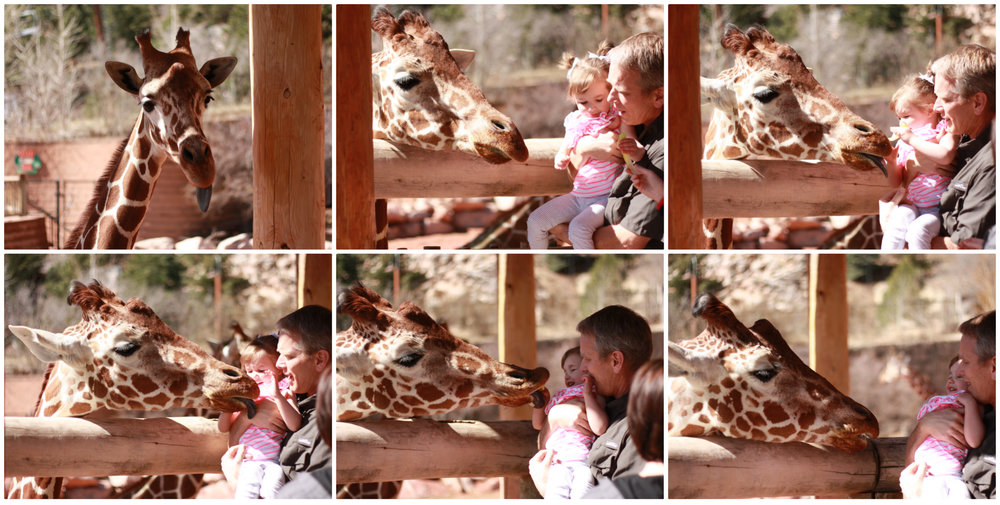 This is the evolution of Georgia (and Greg) being licked by a giraffe. She won't stop talking about it.