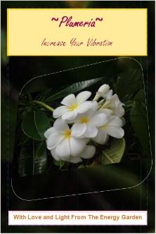 oracle cards Tricia Gunberg plumeria.JPG