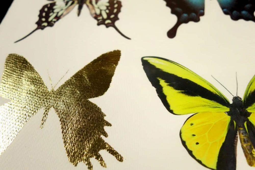 Butterflies Print A (3).JPG