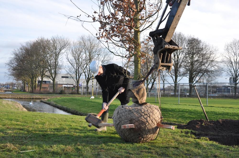 Wethouder Henk Mirck 'verankert' het nieuwe groenbeleid in de gemeente Zwijndrecht