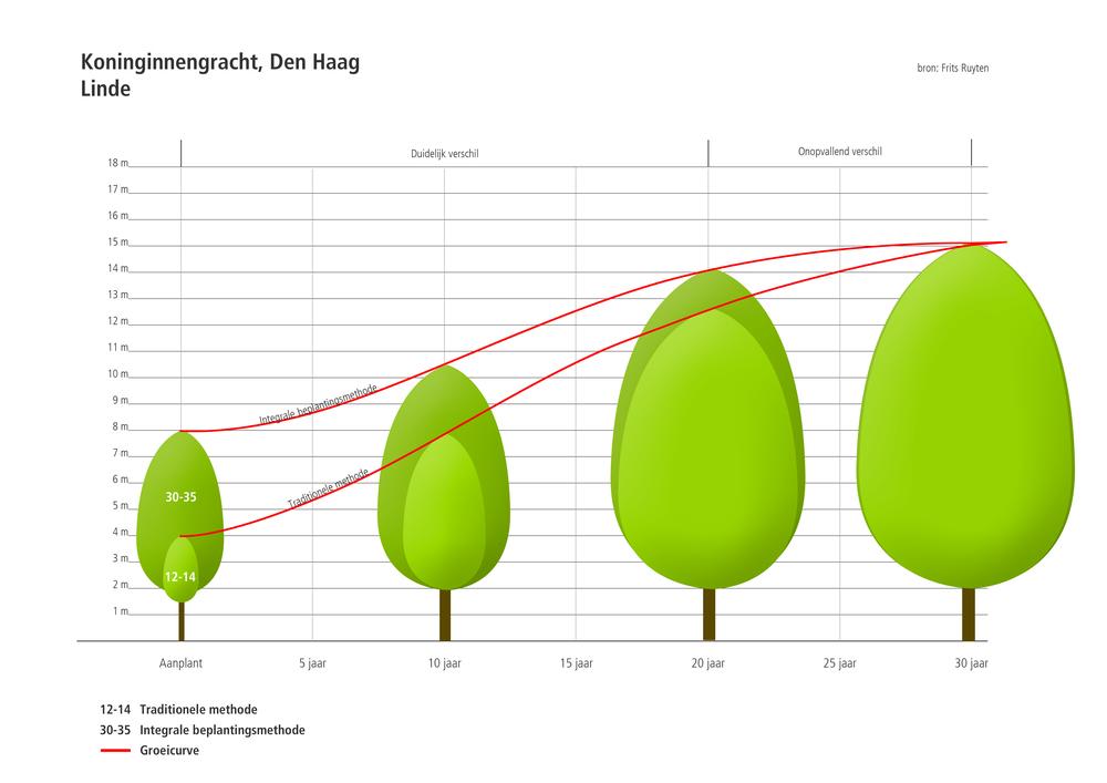 Groeicurve Tilia cordata