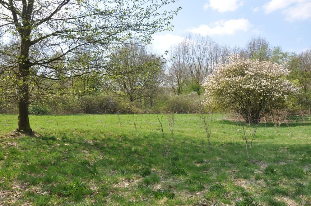 Traditionele aanplant met bosplantsoen -voorjaar 2013