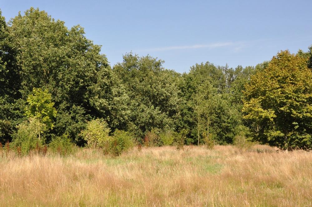 Gemeente Amersfoort: Waterwingebied