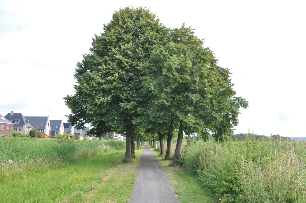 Arnhem-Zuid:Schuytgraaf