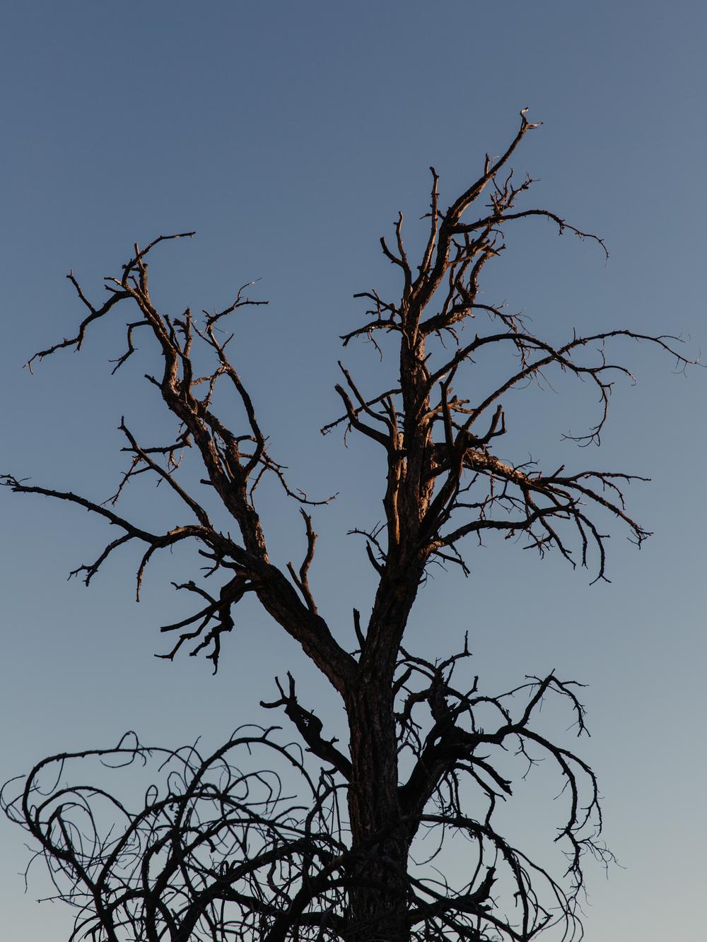 JOSHUA-TREE_Low-Res-22.JPG