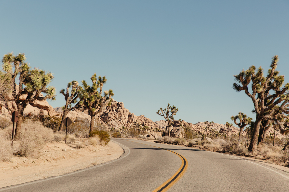 JOSHUA-TREE_Low-Res-4.JPG