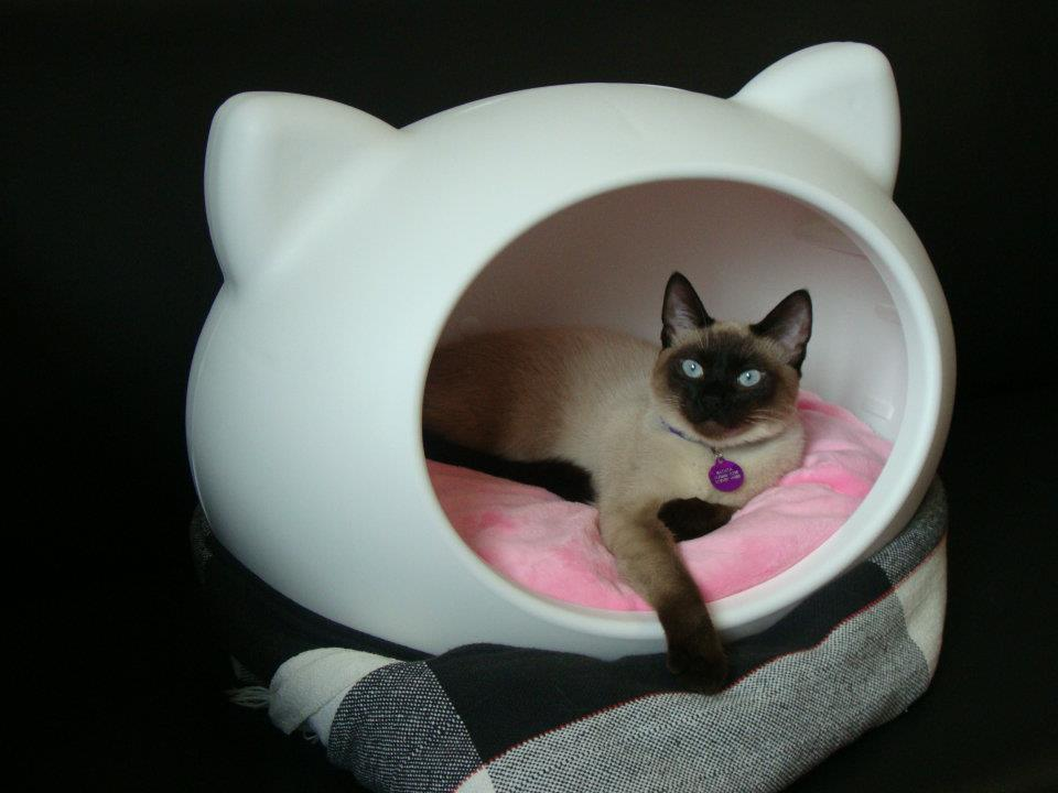 funky_cat_bed_guisapet.jpg