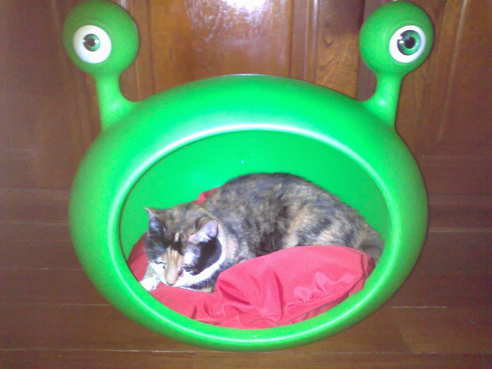 green_durable_cat_bed_uk_guisapet.jpg