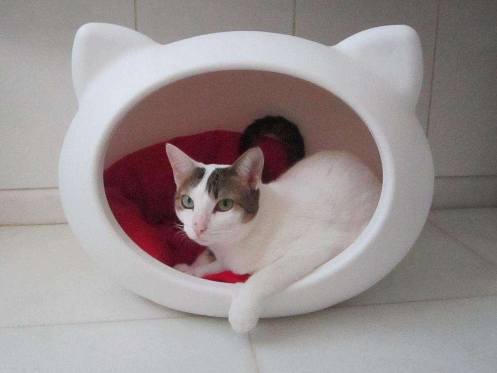 What makes us so unique guisapet for Designer cat beds uk
