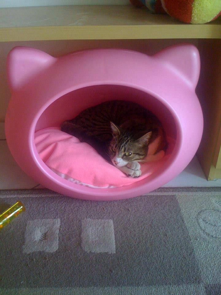 pink_durable_cat_bed_uk_guisapet.jpg