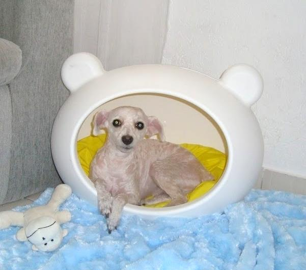 white_modern_dog_beds_guisapet.jpg