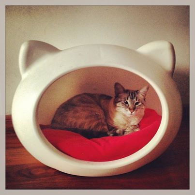 white_cat_cave_red_cushion.jpg
