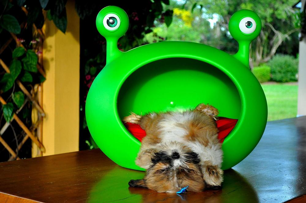 small_dog_bed_house_cave_guisapet.jpg