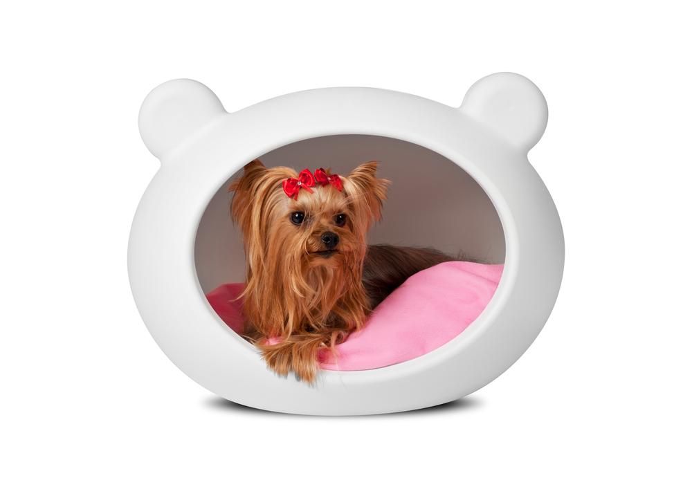 white_dog_bed_pink_cushion copy.jpg