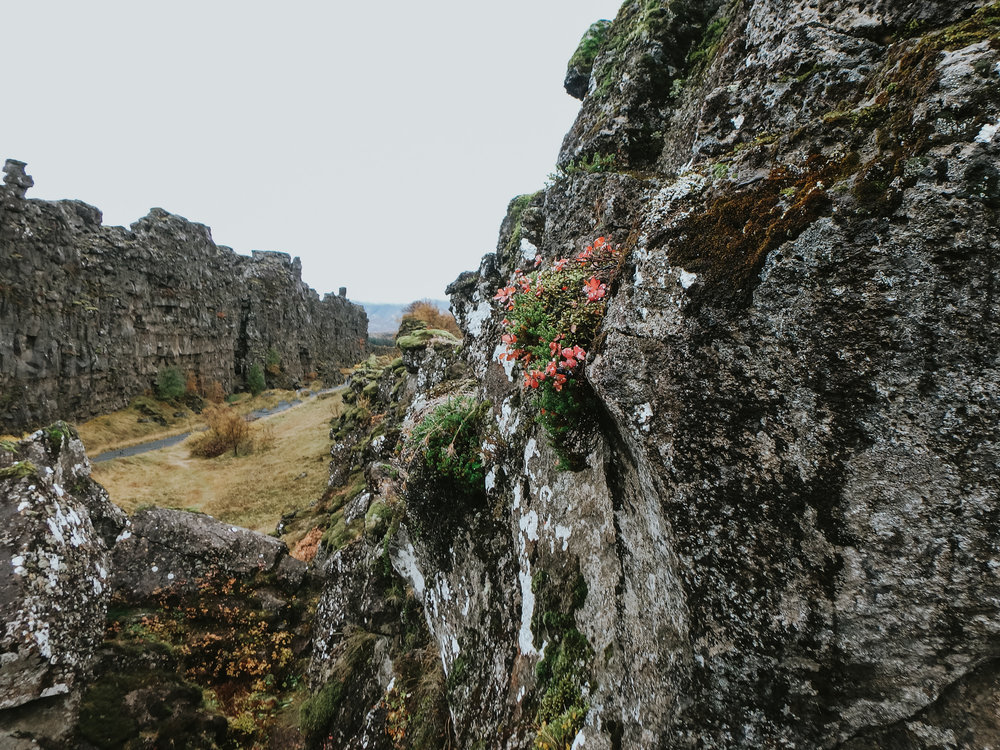 Thingvellir National Park Icelan-2.jpg
