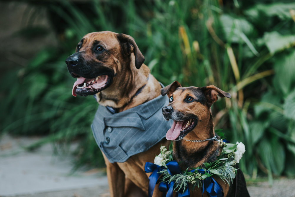 These two should be on the cover of Wedding Dogs Magazine!