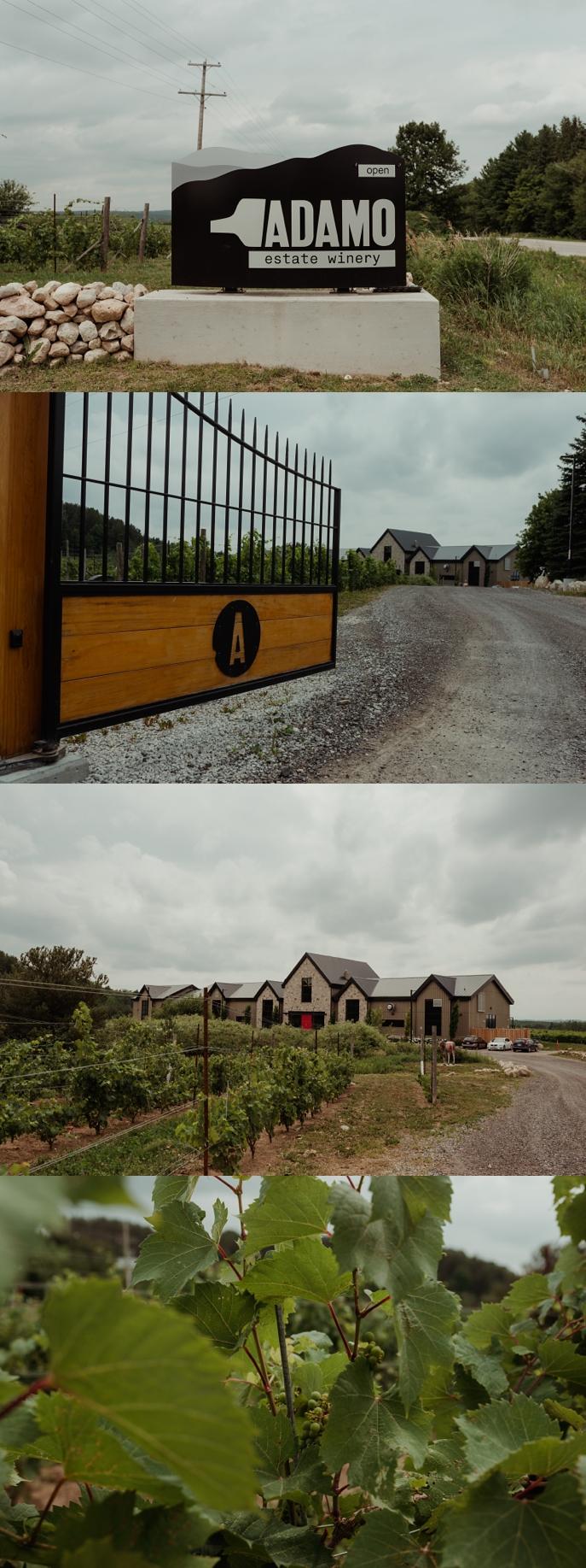 Adamo-estate-winery-hockley-wedding-312-6.jpg