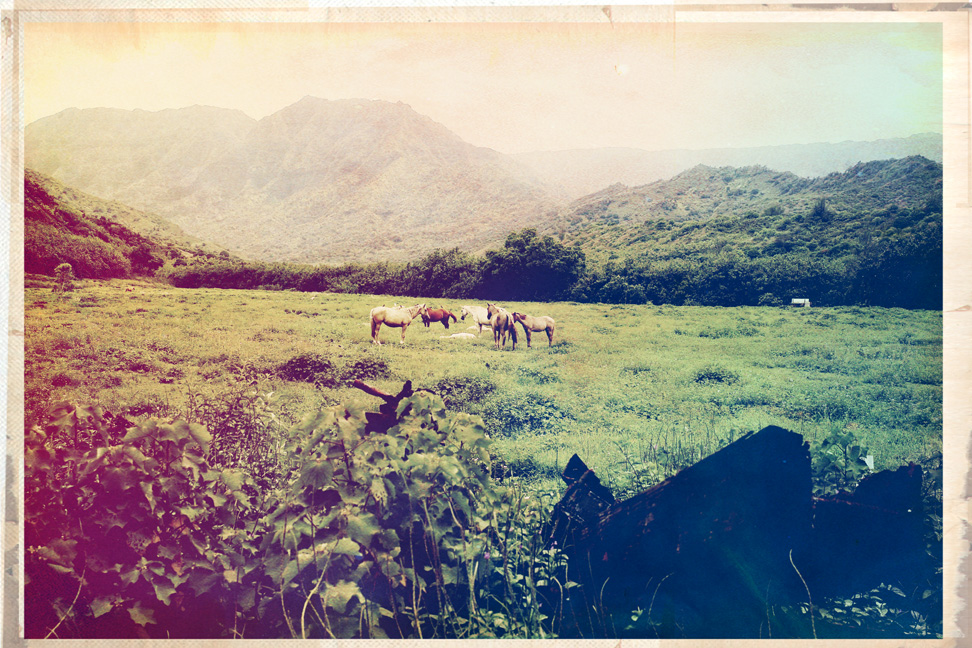 this is Kauai, the north shore. This field of horses was right by my house. Be there sooner than later… next time, BoboWoodlake and CradletotheGrave and SuninScorpio come with.