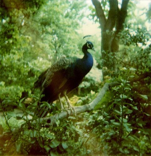 birds these days (via amalia chimera)
