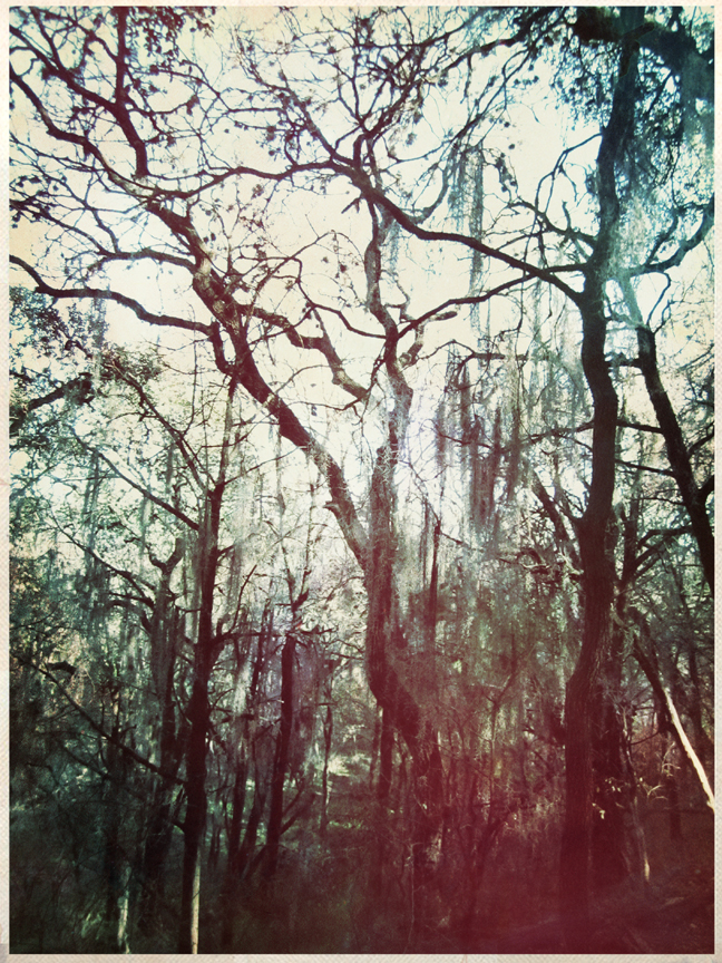 moss forest. austin, texas. alexandra valenti. alexandraintheforest.com