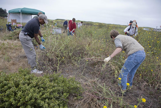 Francis Beach property habitat restoration photos by Mike Kahn / Green Stock Media