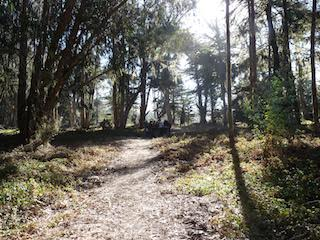 A trail leading through trees at the Purissima Old Town Site