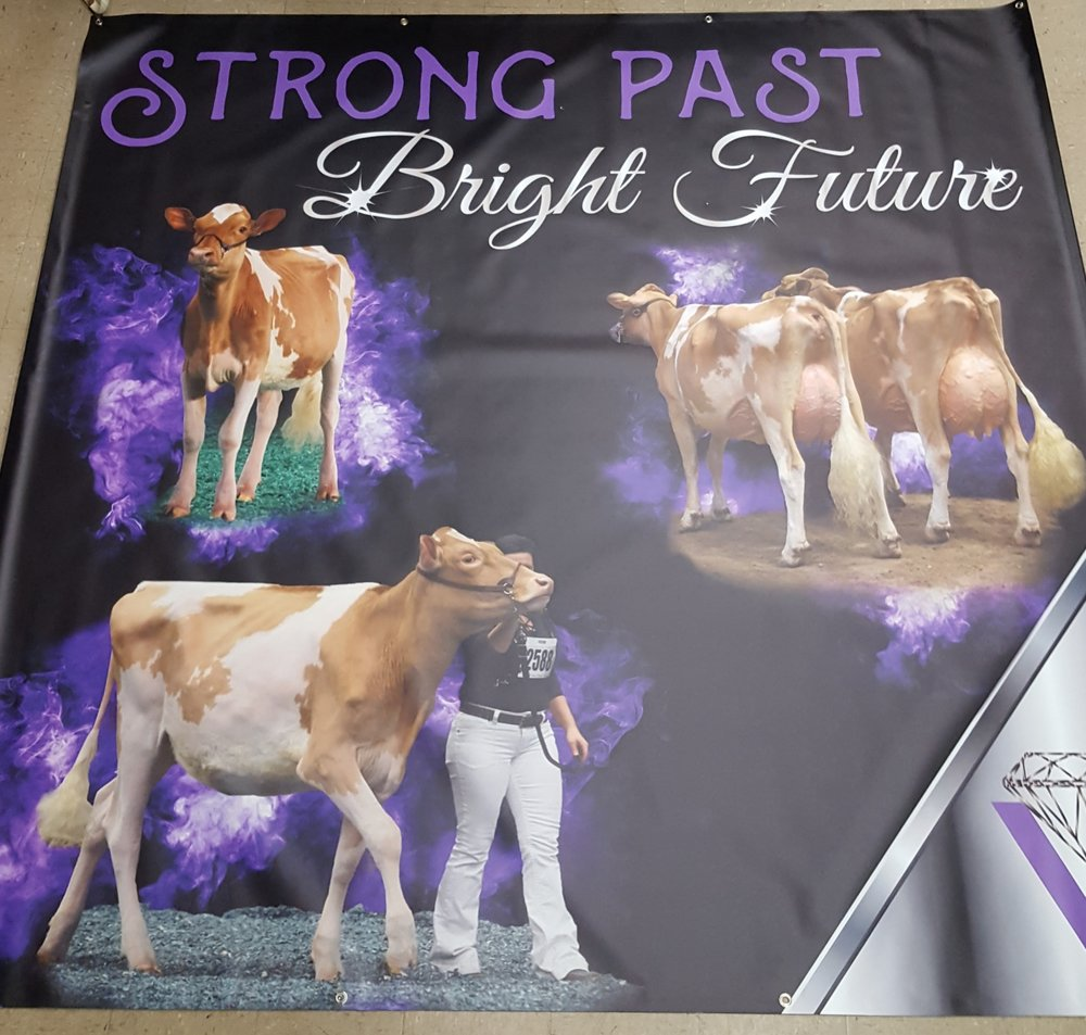 Large vinyl banners -