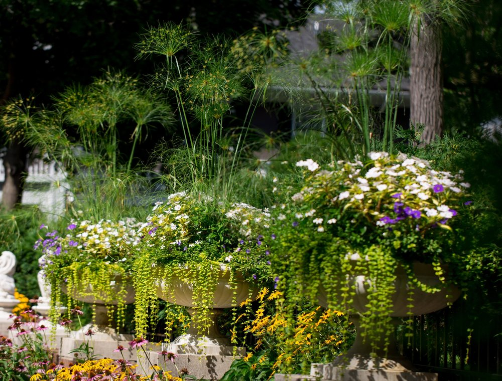 Phillips Garden - Baig 20170811-011 copy.jpg