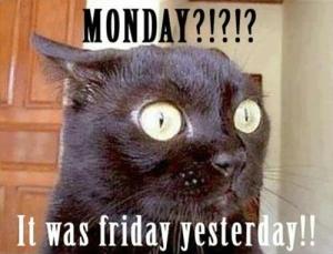 Monday Cat Meme