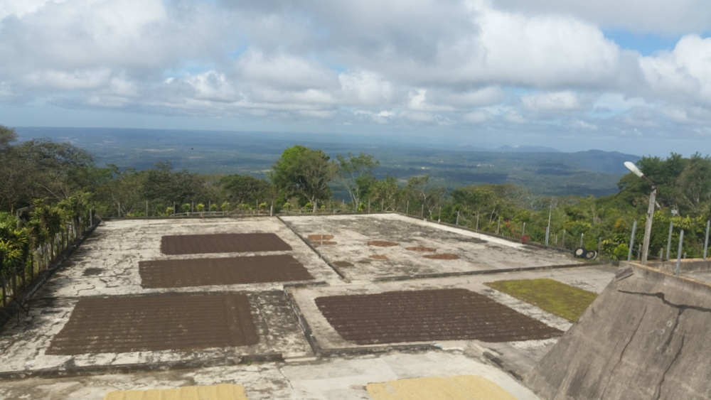 Coffee beans drying at Cafe Las Flores, Mombacho, Nicaragua