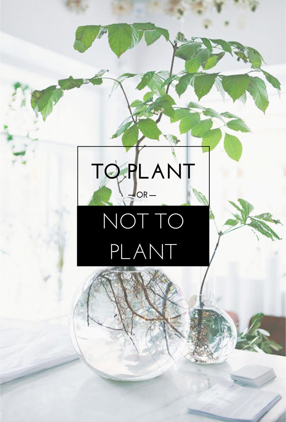 Plant-plantar's