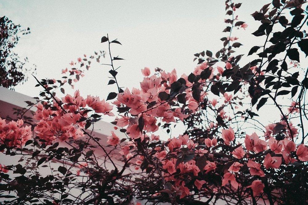 bodegathirteen_mondaymood_flowers