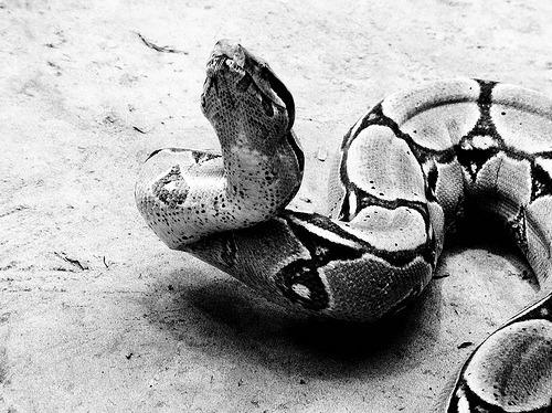 bodegathirteen_mondaymood_snake.jpg