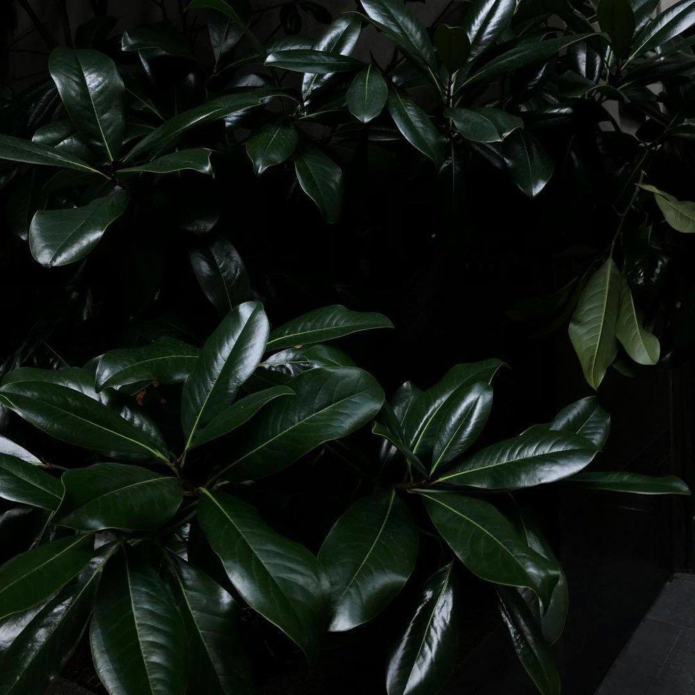 bodegathirteen_mondaymood_images_plants.jpg