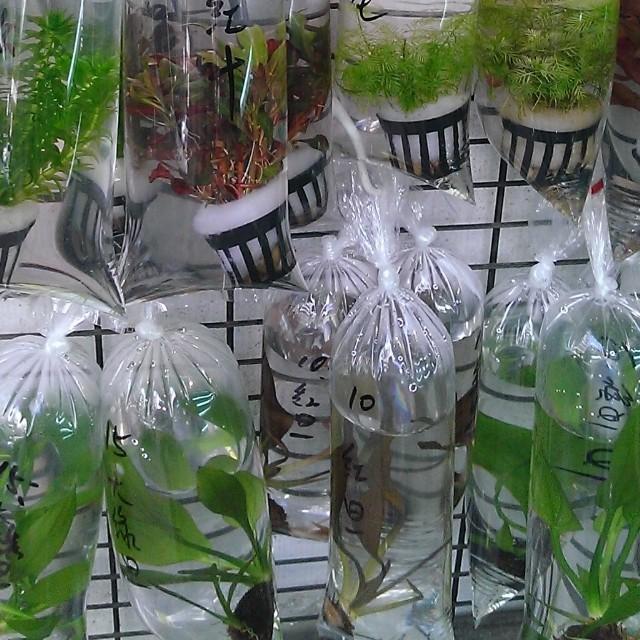 bodegathirteen_mondaymood_plants.jpg