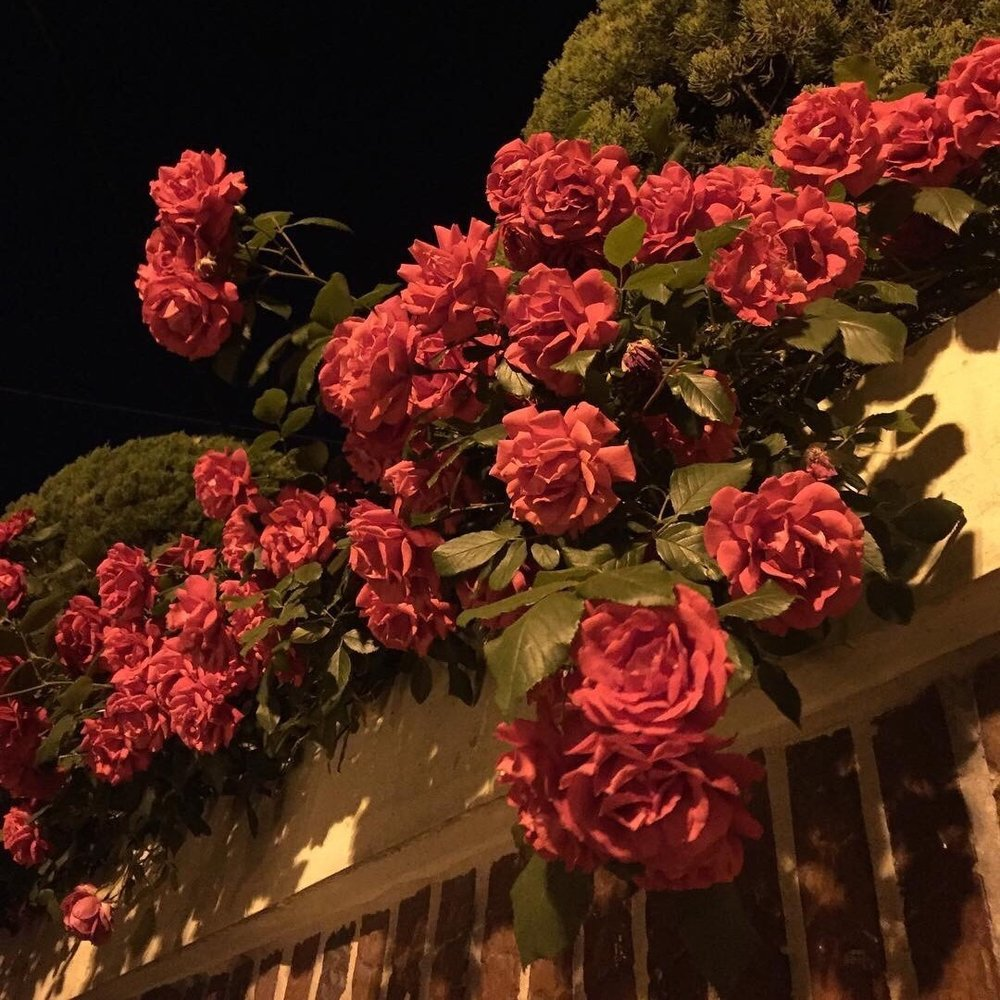 bodegathirteen_monday_mood_pink_flowers.jpg