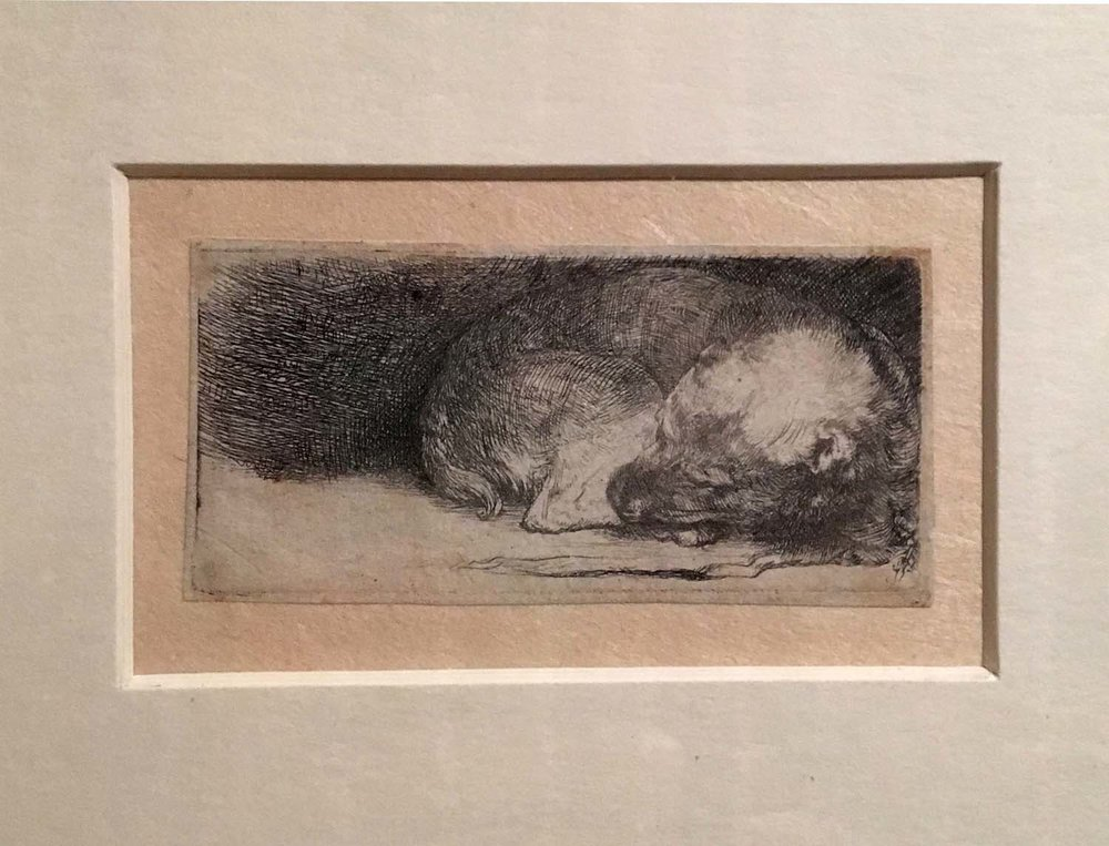Rembrandt, Sleeping dog, etching