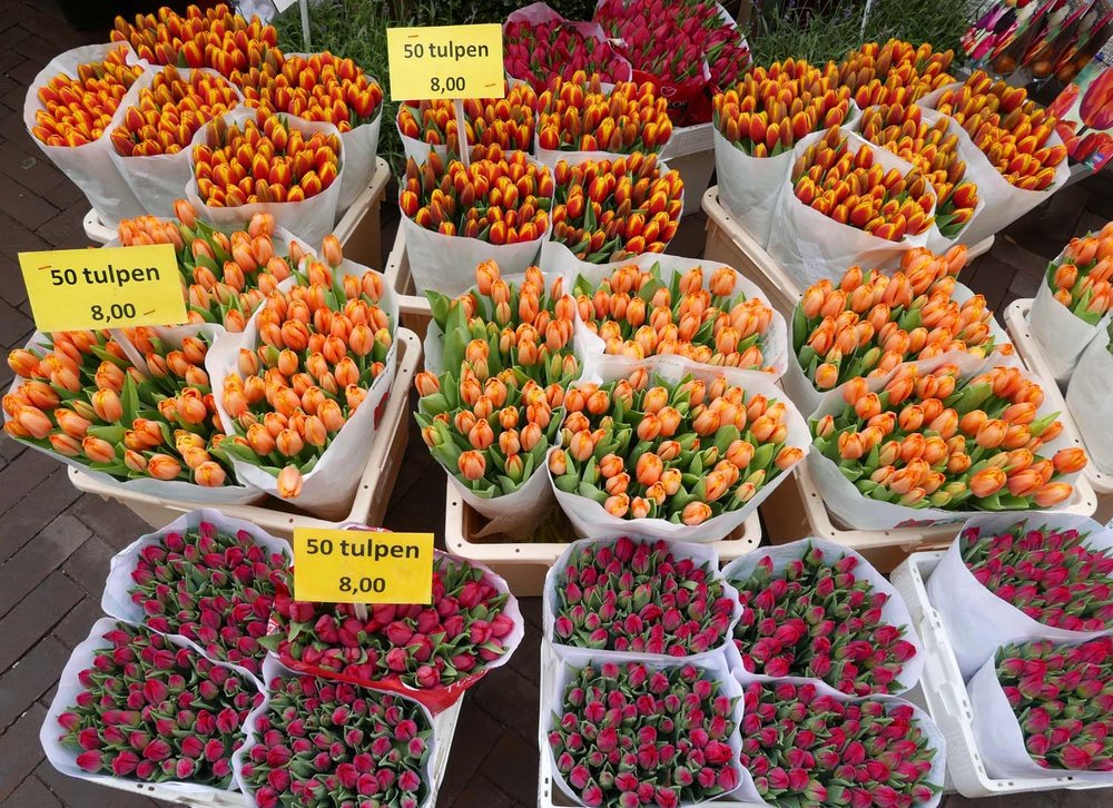 tulips at the flower market