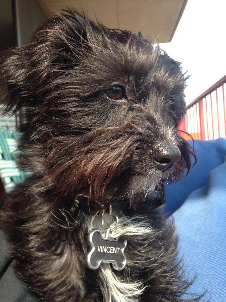 Vincent Alexander. Cheif Canine Officer, WarPaint International Beauty Agency