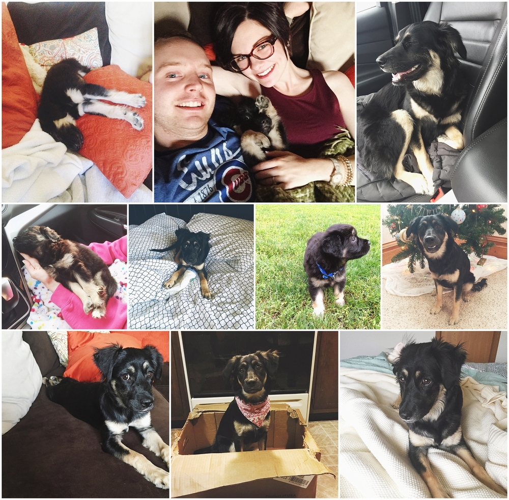 By Kara - Kara Evans - My Life Monday - Lifestyle Blogger - Georgie's First Birthday - Georgie Ann Evans - Wright Way Rescue