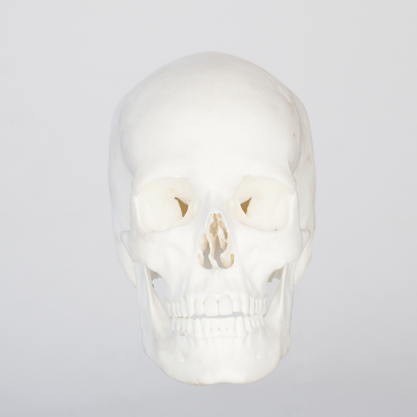 skull-face_skull-only_3-sized.jpg