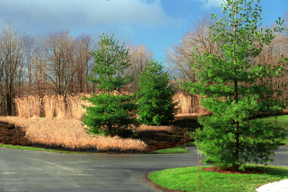 GeaCBMH-Winter-Island Pine.jpg