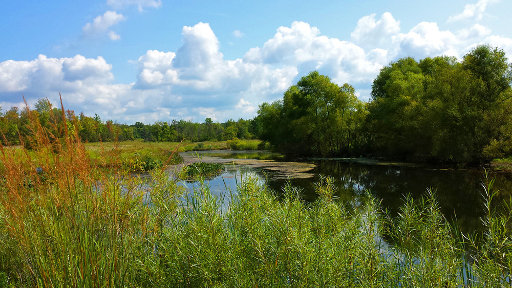 Enhanced Constructed Wetlands