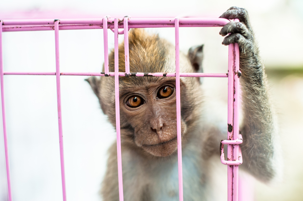 caged-monkey.jpg