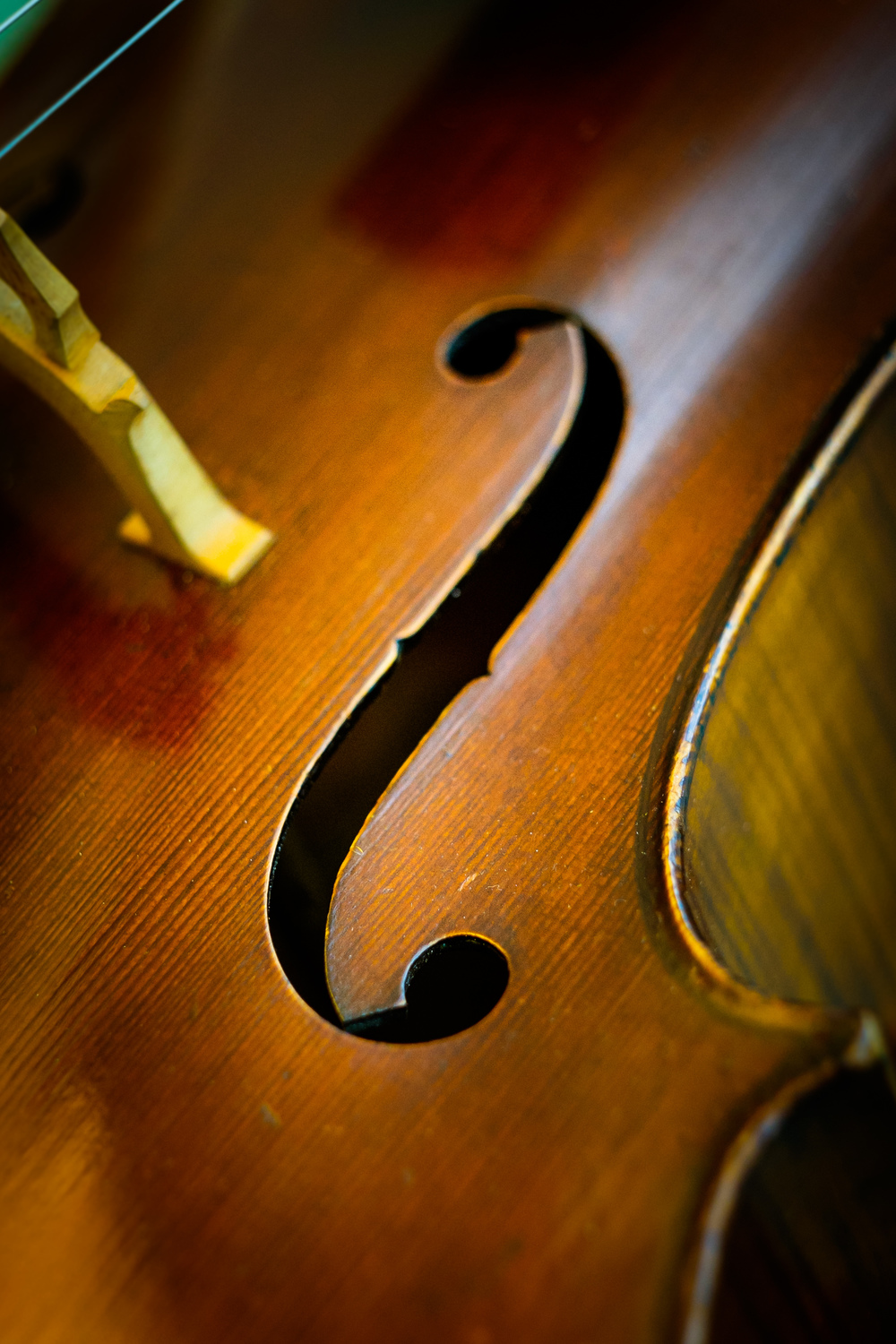 cello-detail-1.jpg