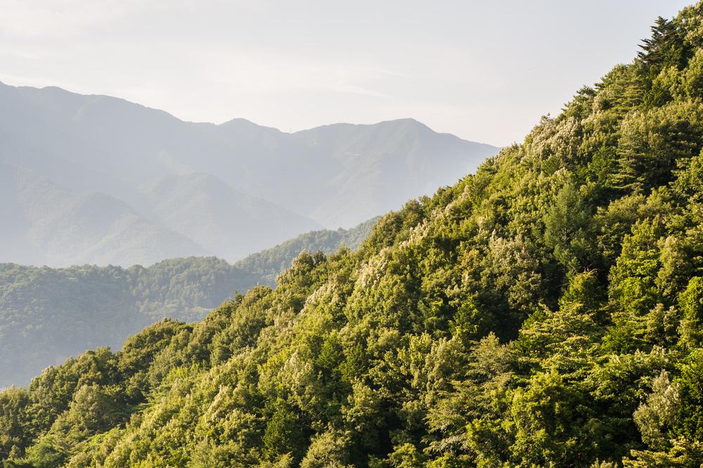 forest-hills-japan.jpg