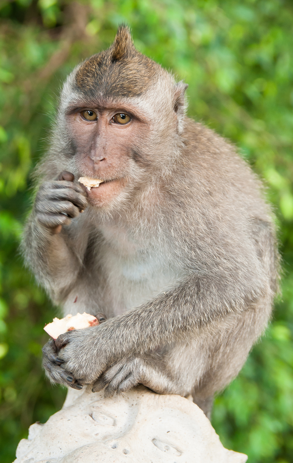 monkey-forest-bali.jpg