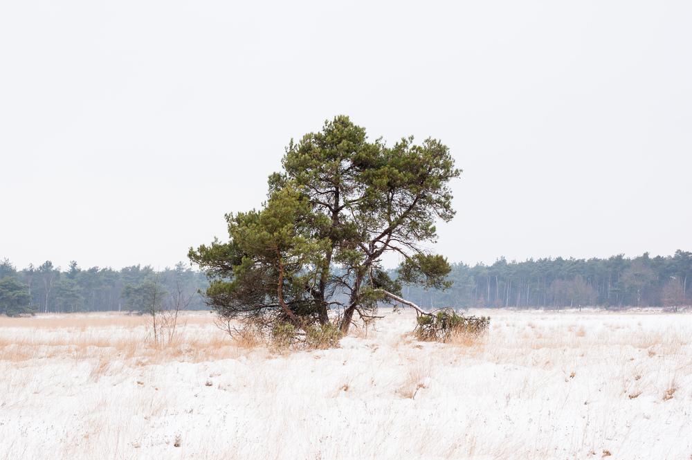 tree-snow-holland.jpg