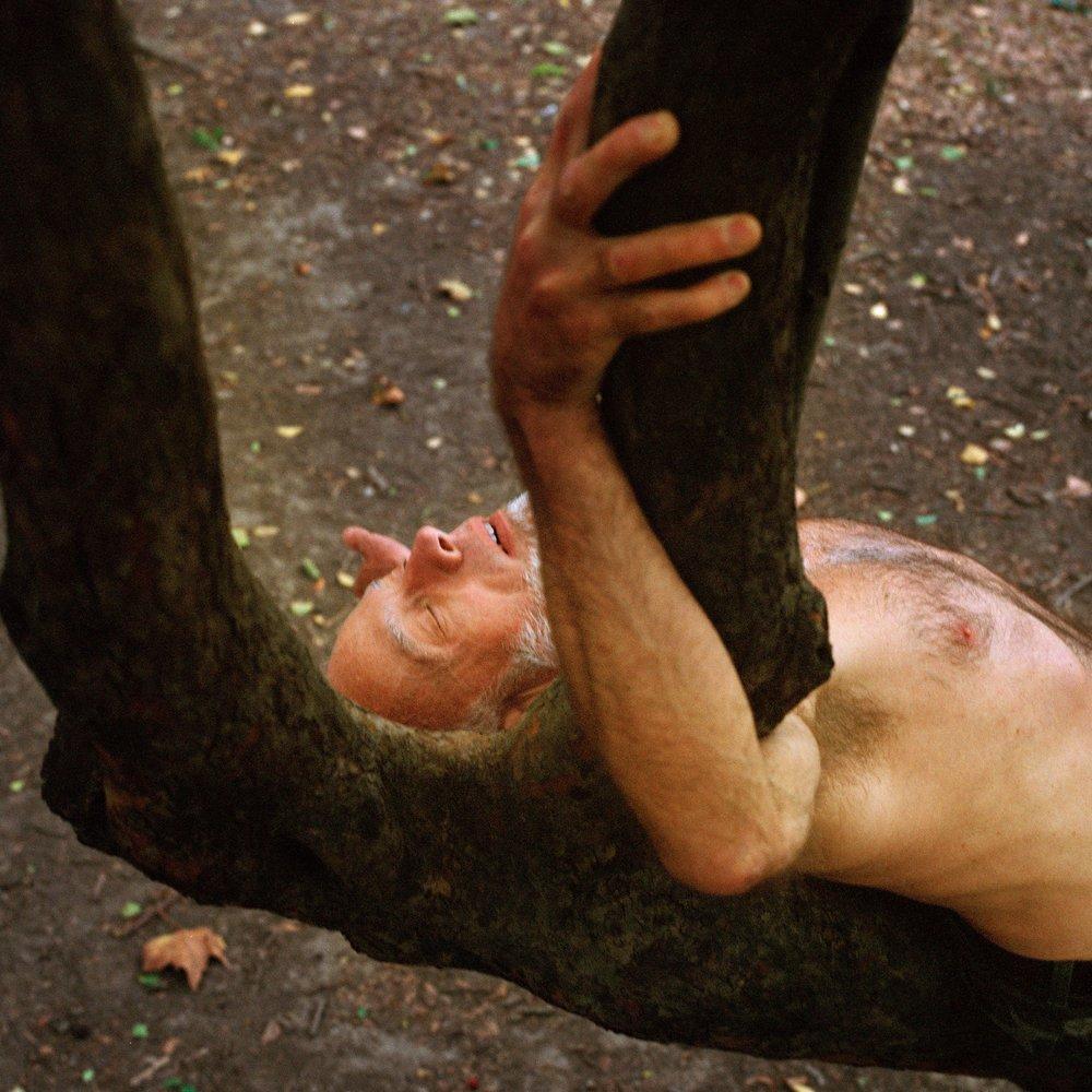41_Dennis in the Tree_1.jpg